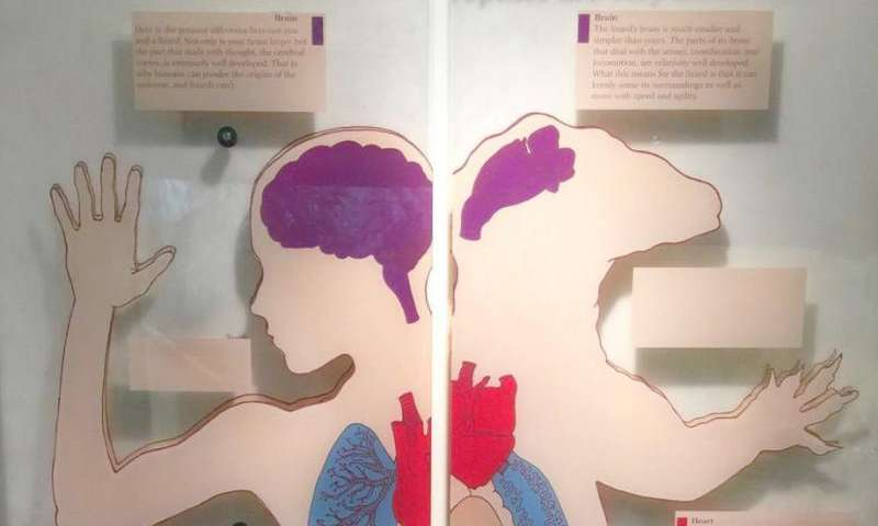 Using the placenta to understand how complex organs evolve