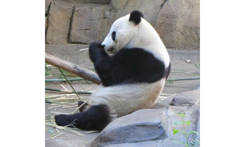 Why pandas are black and white