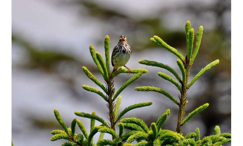 Winter sets up breeding success: Study