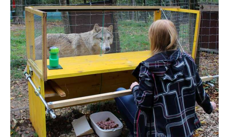 Wolves understand cause and effect better than dogs