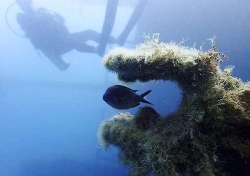 Wrecks, sunken treasures lie under Albania's coastal waters