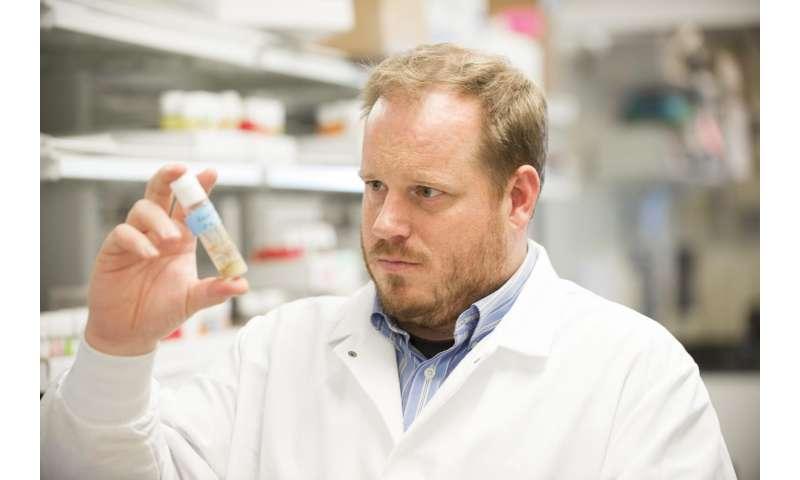 WSU researchers find a 'sleep gene'