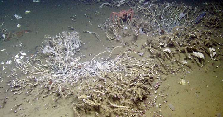 Biodiversity surprises at bubbly deep-sea cold seeps along Cascadia fault