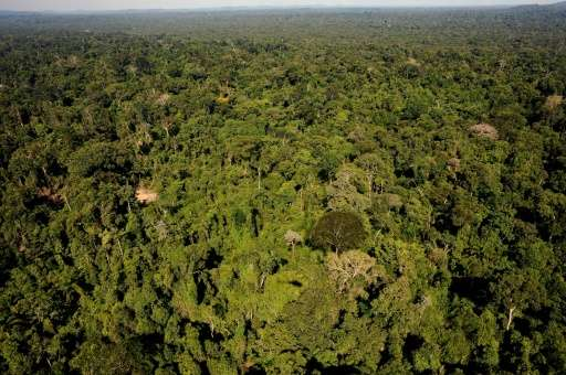 Scientists say Brazil is in danger of disregarding the consequences of the destruction of its ecosystems, particularly in the Am