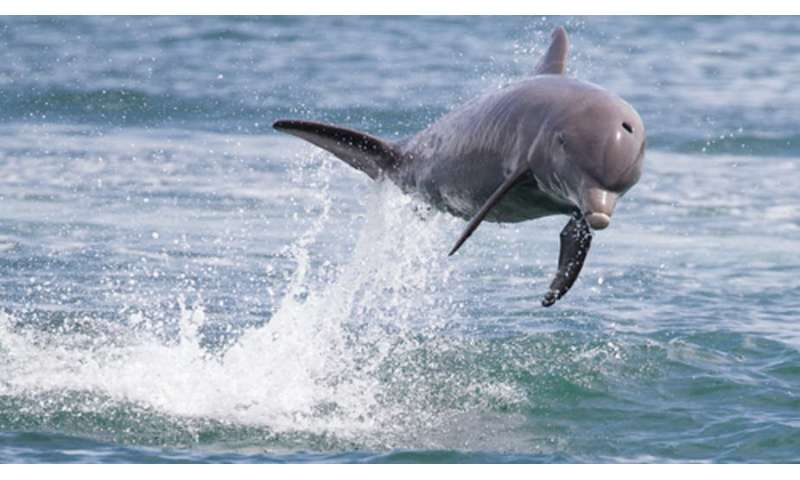 Researchers find pathological signs of Alzheimer's in dolphins, whose brains are much like humans'