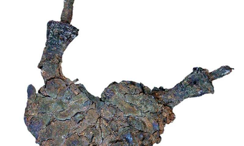 Paleontologists find fossil relative of Ginkgo biloba