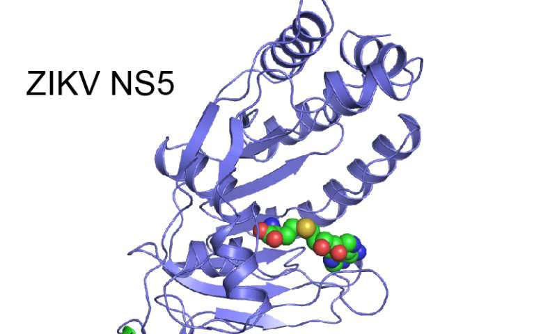 Researchers crack structure of key protein in Zika virus