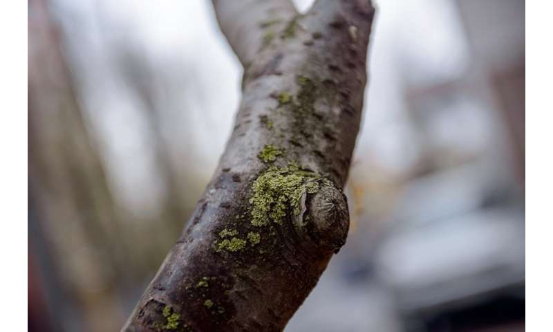 Scientists enlist lichens to monitor air pollution