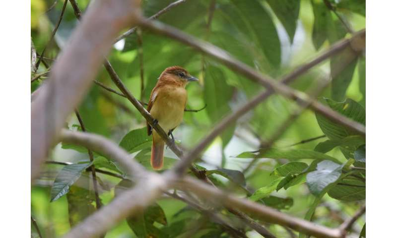 New research suggests bird songs isolate species