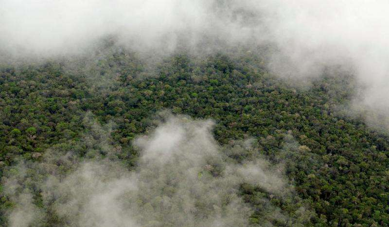 New study shows the Amazon makes its own rainy season