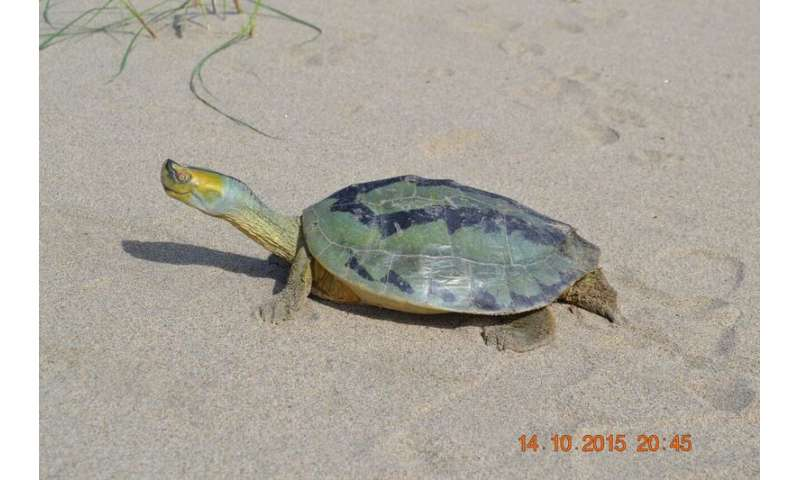 Scientists discover eggs of one of world's most endangered turtles