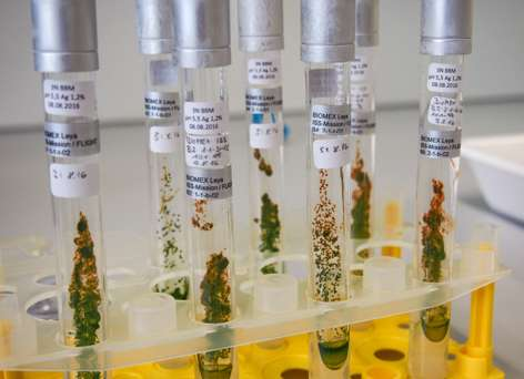 Algae survive heat, cold and cosmic radiation