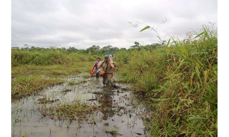 Amazon farmers discovered the secret of domesticating wild rice 4,000 years ago