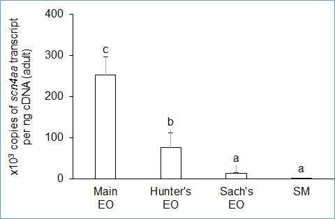 Bioelectricity from eels