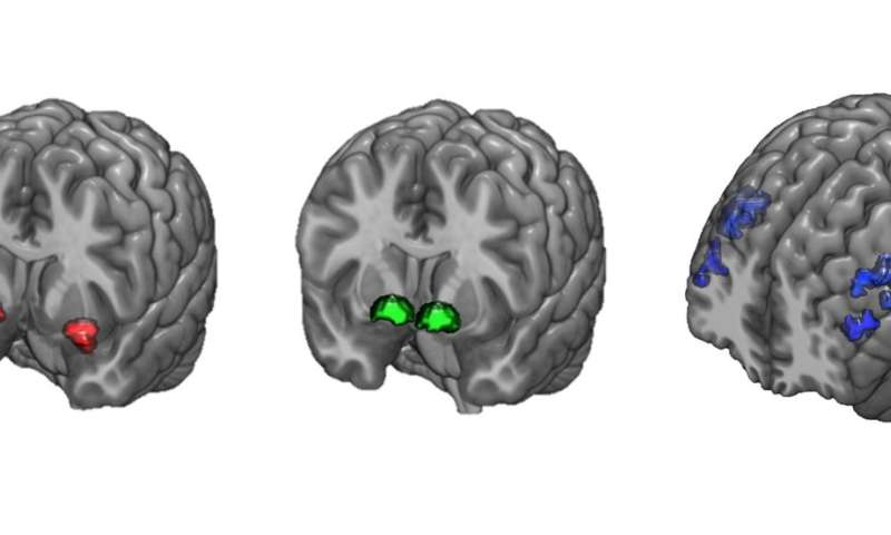 Brain activity buffers against worsening anxiety