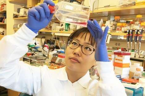 Common use of antibiotics in cells grown for research could distort tests