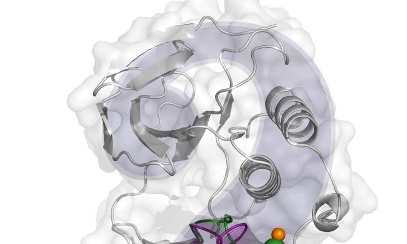 Computational research details the activation mechanism of p38α