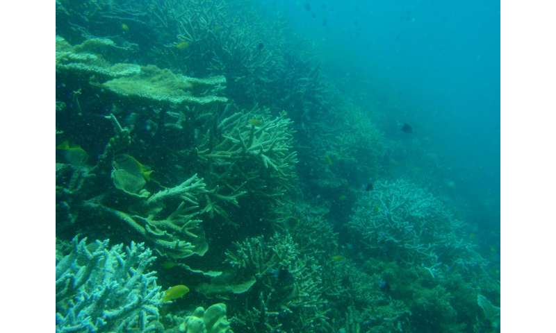 Coral loss on Palm Islands long precedes 2016 mass bleaching on Great Barrier Reef