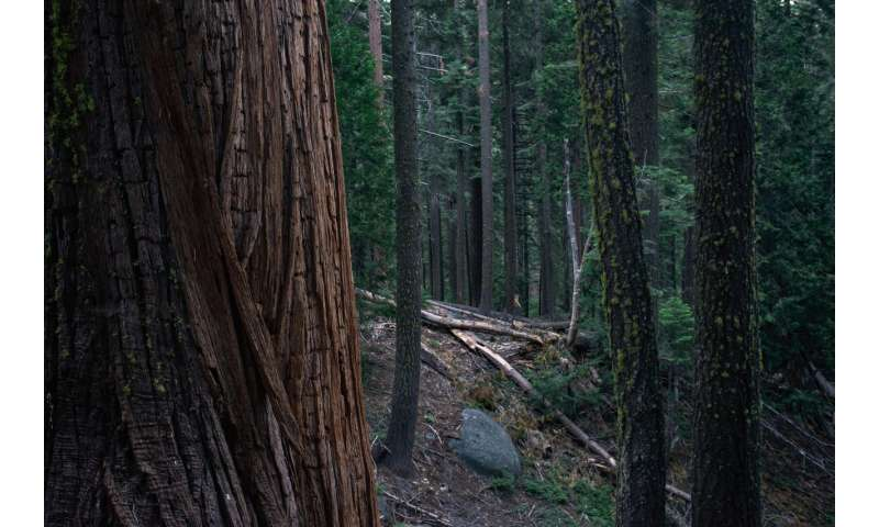 Decades-past logging still threatens spotted owls in national forests