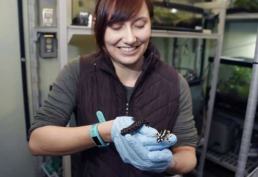Detroit Zoo's own Dr. Ruth encourages amorous amphibians