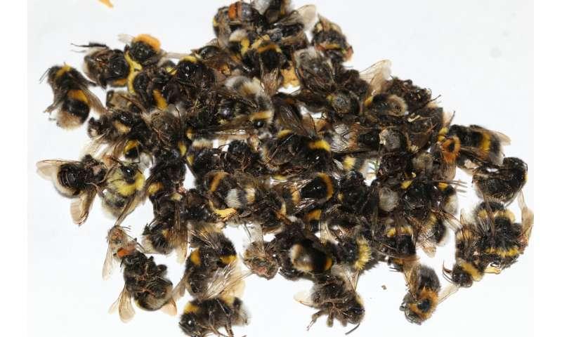 Do lime trees kill bees?