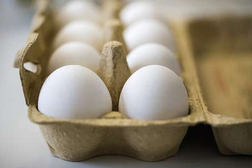 Dutch arrest 2 suspects in investigation into tainted eggs