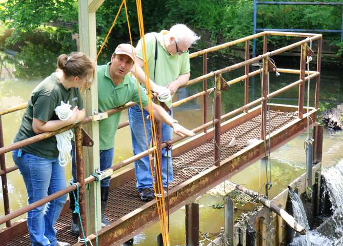 'Eelevator' project gives American eels a lift