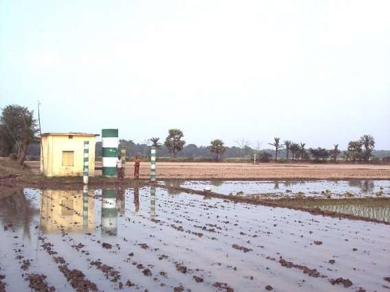 Field study shows that arsenic in groundwater reduces rice yields in Bangladesh