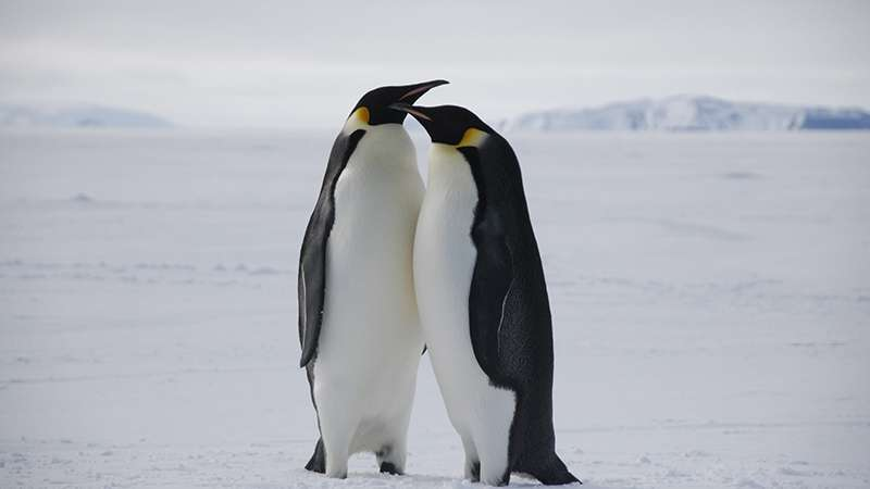 Finding new homes won't help Emperor penguins cope with climate change