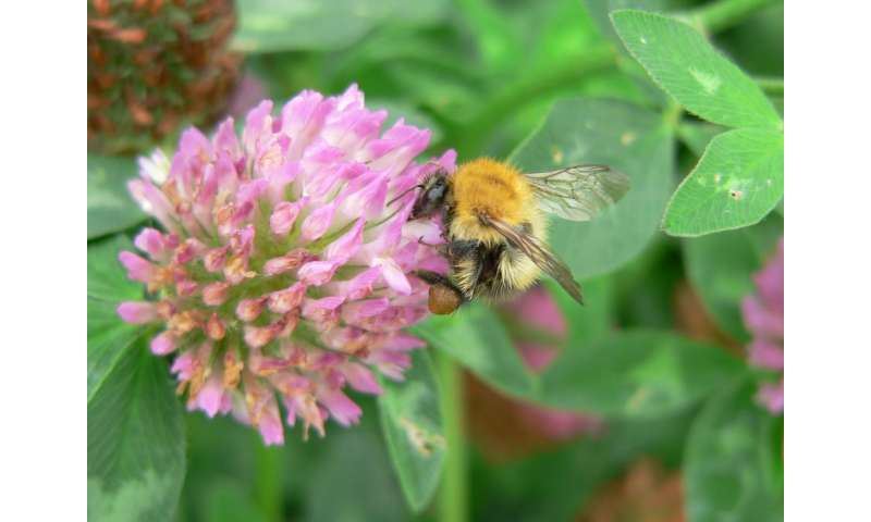 Flower-rich habitats increase survival of bumblebee families