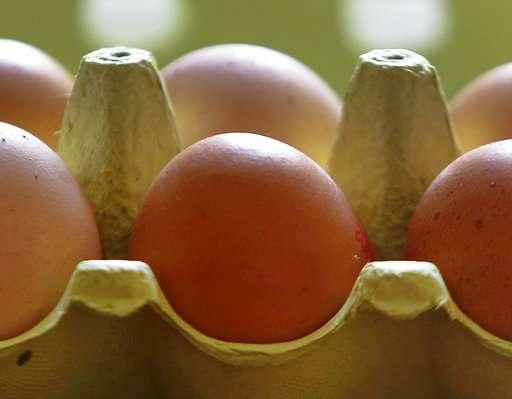 German supermarket chain yanks eggs amid pesticide scare