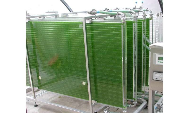 How marine algae could help feed the world