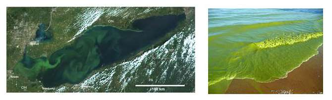 How satellite data led to a breakthrough for Lake Erie toxic algal blooms