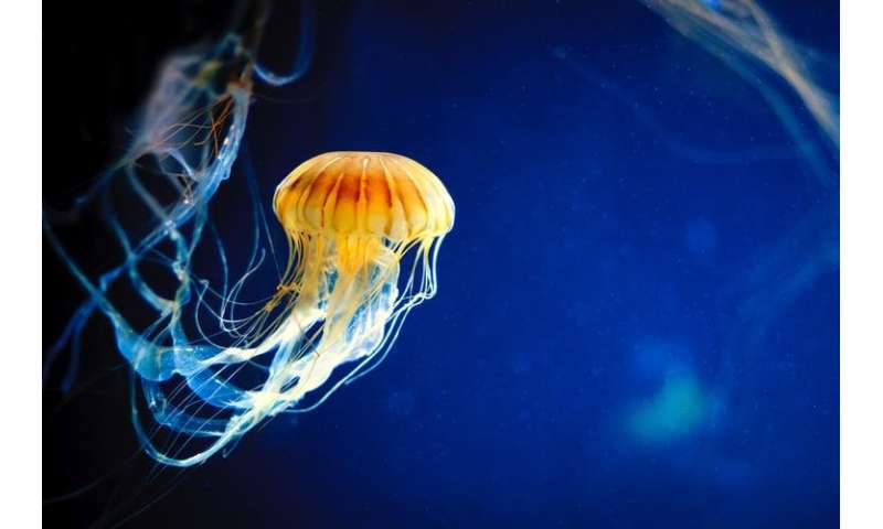 Jellyfish have superpowers – and other reasons they don't deserve their bad reputation