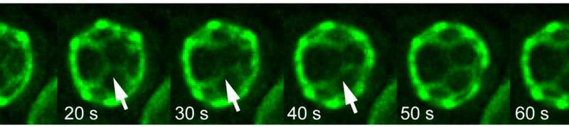 Living cell membranes can self-sort their components by 'demixing'