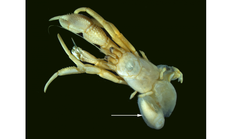 Marine parasites: Different strokes for different folks