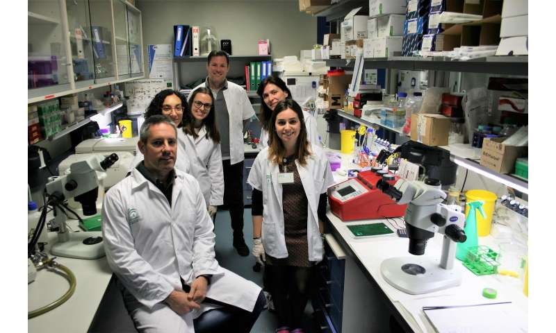 Members of the University of Seville discover neural stem cells can become blood vessels