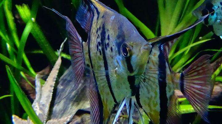 Murky Amazon waters cloud fish vision