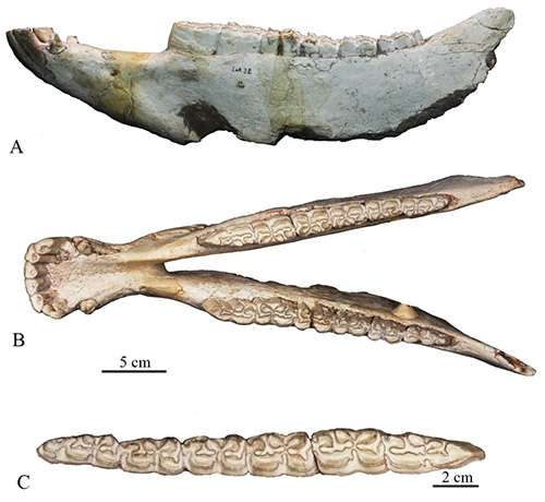 New progress of research on fossil Equus