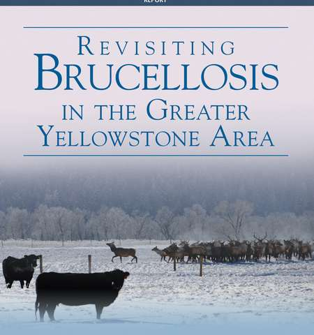 New report calls on federal and state collaboration to address brucellosis transmission from elk