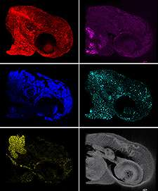 New technology enables 5-dimensional imaging in live animals and humans