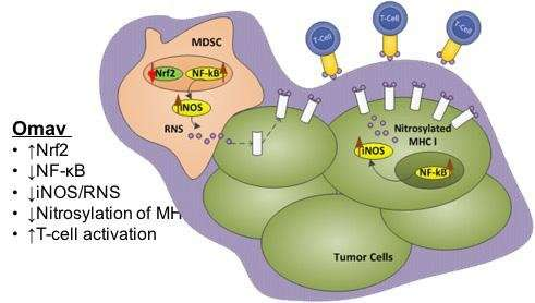 Novel compound restores immune response in patients with melanoma