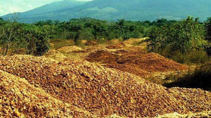 Orange is the new green: How orange peels revived a Costa Rican forest
