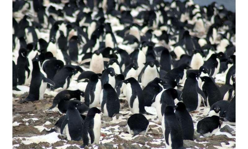 Penguin forensics