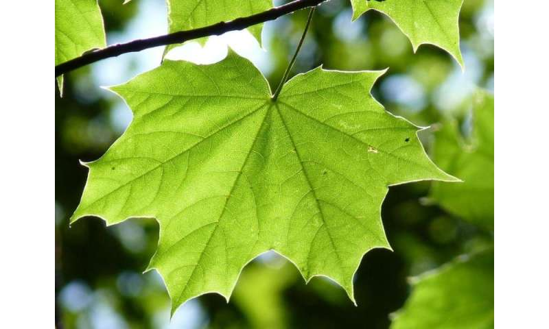 Scientists explore using photosynthesis to help damaged hearts