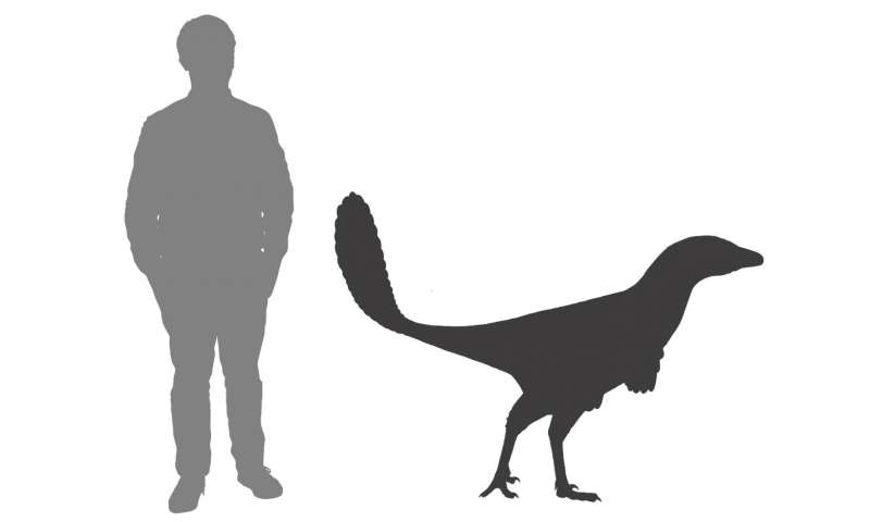 Scientists name new species of dinosaur after Canadian icon