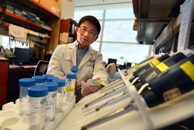 Scientists work to strengthen the synergy of chemotherapy and immunotherapy against cancer