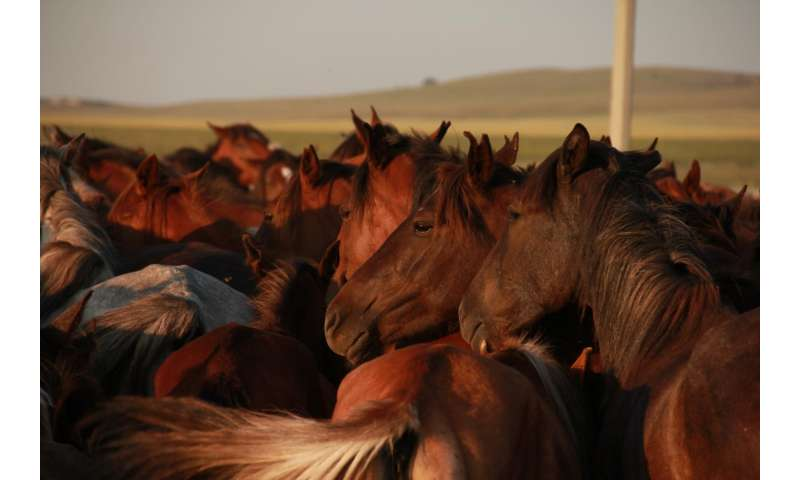 Scythian horse breeding unveiled: Lessons for animal domestication