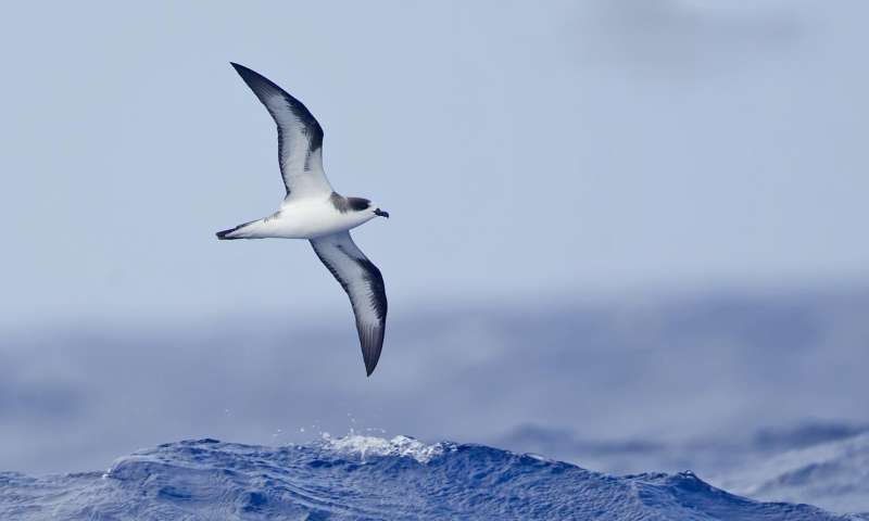 Seabird bones, fossils reveal broad food-web shift in North Pacific