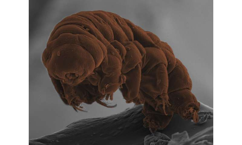 Secrets of the amazing tardigrades revealed by their DNA